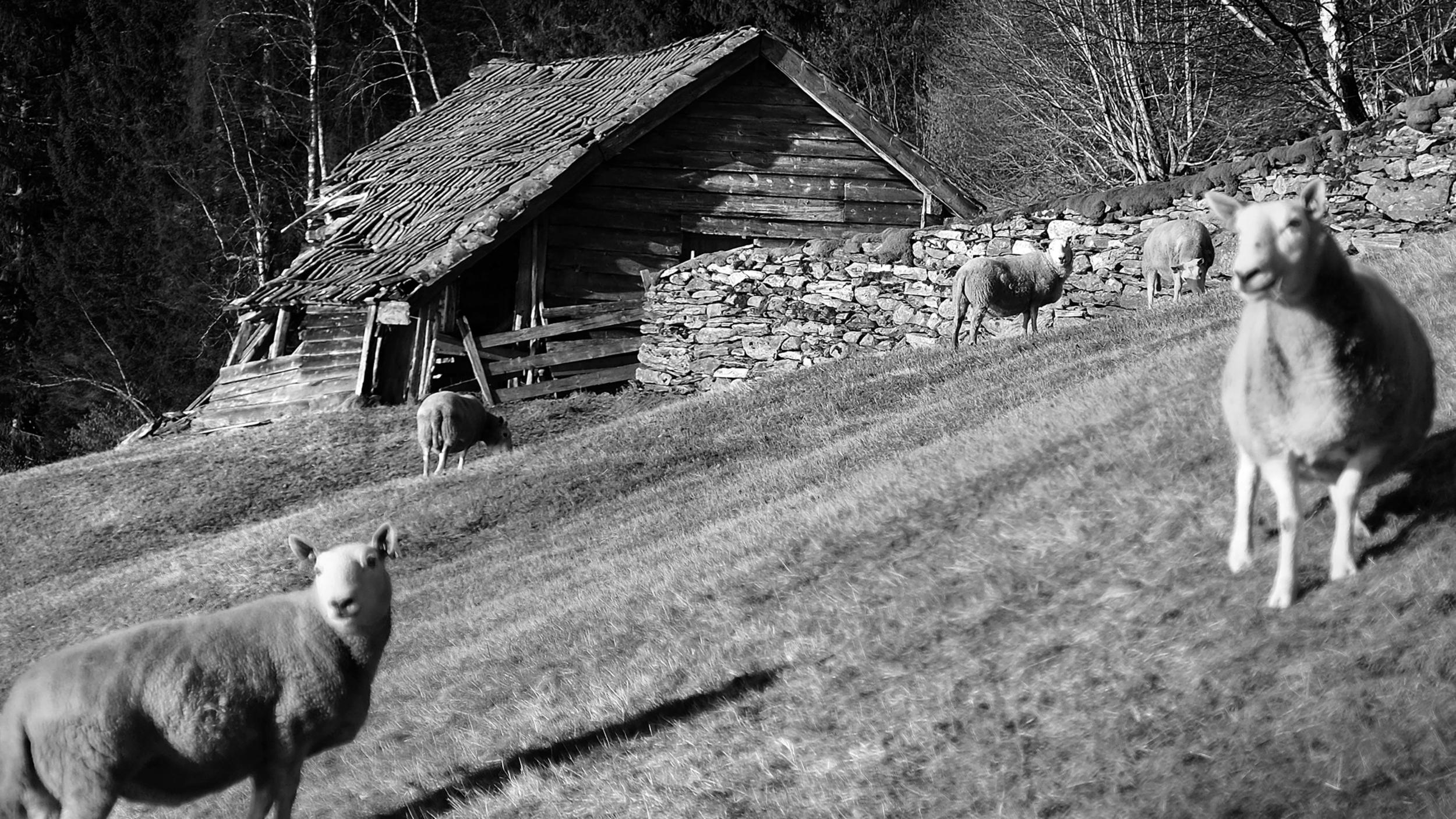 Fotografi: Øystein Forheim, Freqency.no